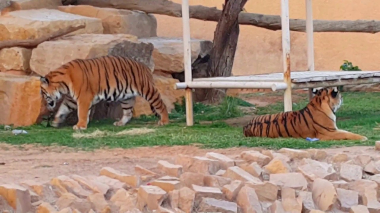 Striveme مواعيد حديقة الحيوان بالرياض 2020